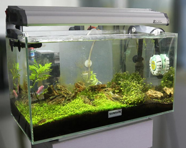 Sunsun mini aquarium fish tank automatic heater anti for Best fish tank heater